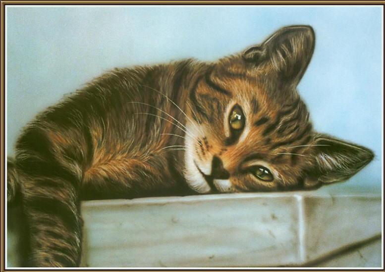 Portrait of cat. Greg Hurley