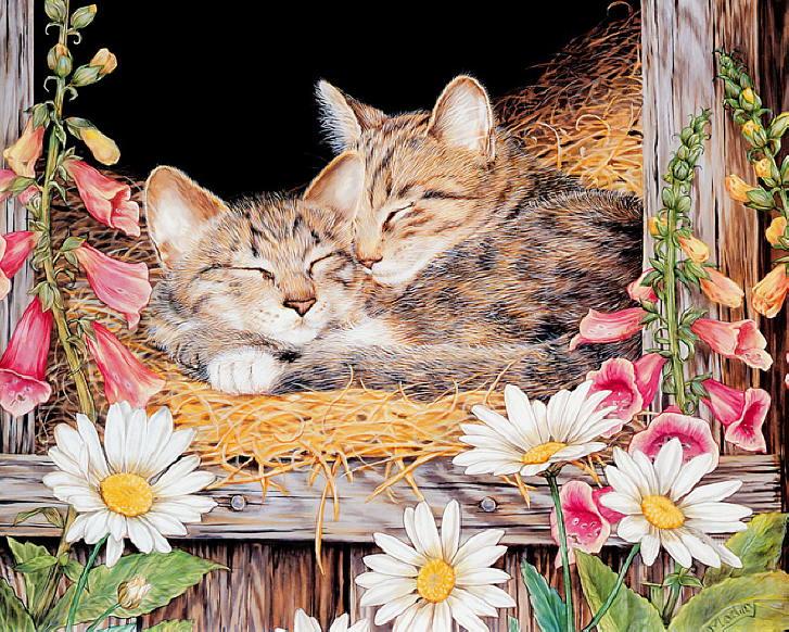 Картина котят.  Джейн Мадай